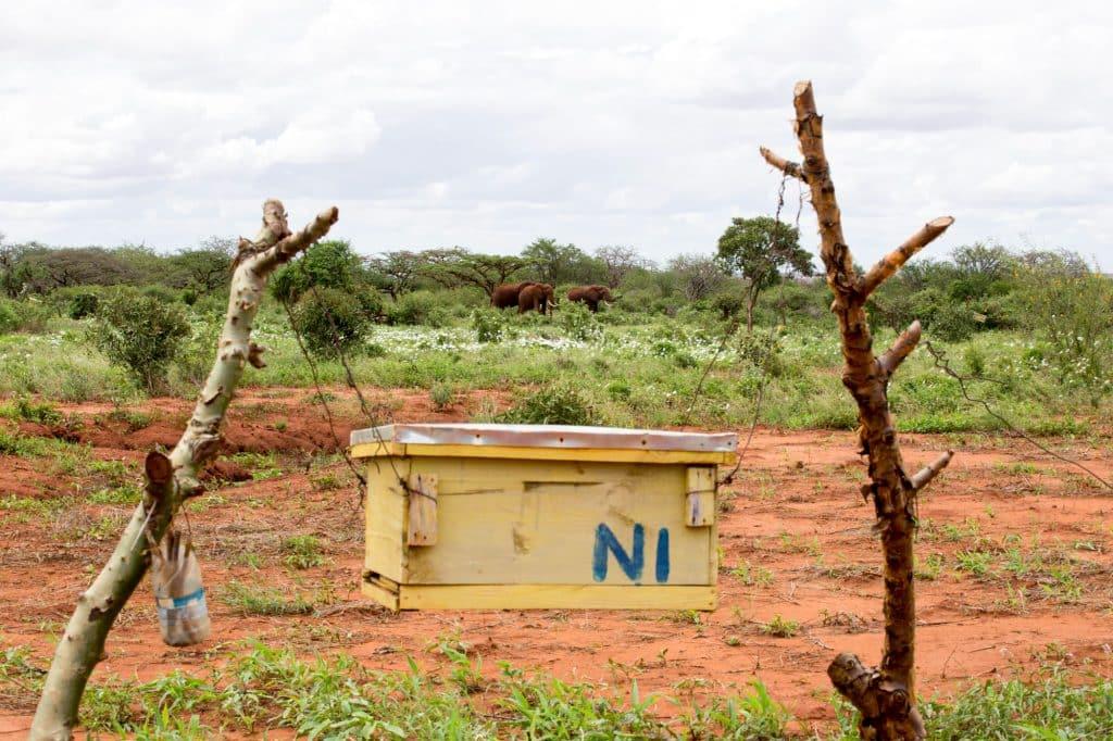 Beehive Fence And Elephants Jessica Van Fleteren 1024x682